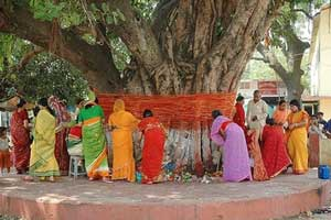 Vat Savitri Vrat is observed to fetch the blessings of the long life of husband by women